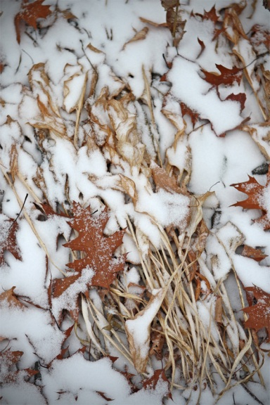 snow+leaves