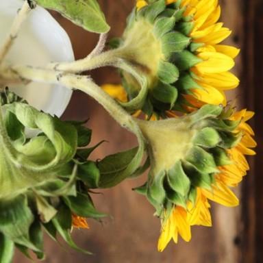 sunflowers_past