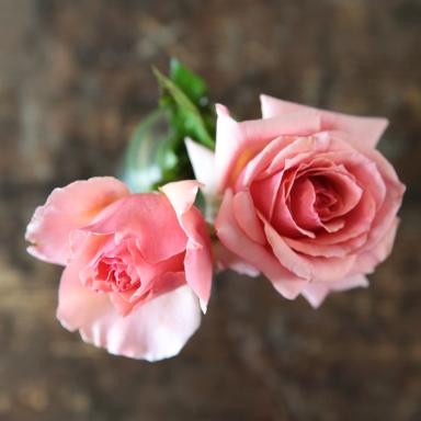 rose_start